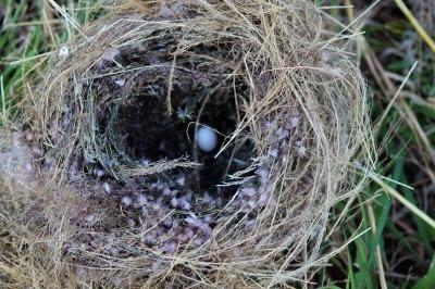 nest-509499_1280