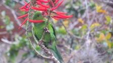 ...e periquito verde. Fotos: Raquel Colombo Oliveira